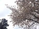 2017-04-09T20:41:12.JPG